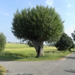 Boiensdorf - Landschaft 1