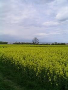 Boiensdorf - Landschaft 2