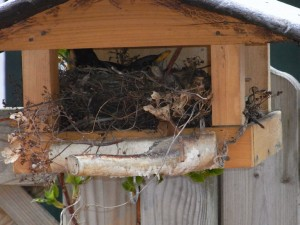 Haus Meeresbrise - Nest